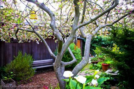 Garden.10