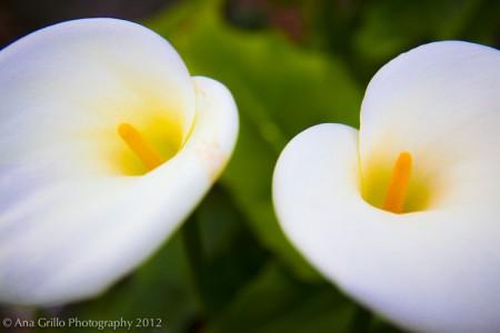 Garden.11