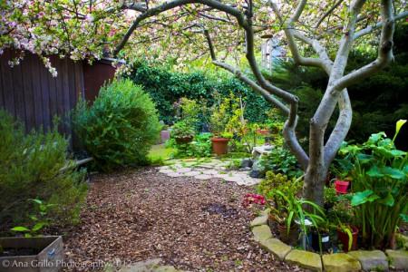 Garden.4